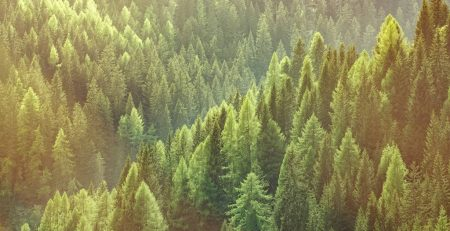 Sustainable Forest